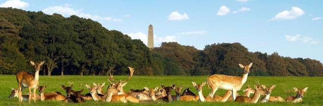 deer-in-phoenix-park-dublin.jpg